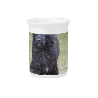Black Portuguese Water Dog Beverage Pitcher