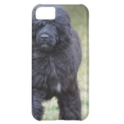 Case-Mate Barely There iPhone 5C Case with Portuguese Water Dog Phone Cases design