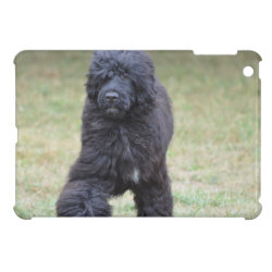 Case Savvy iPad Mini Glossy Finish Case with Portuguese Water Dog Phone Cases design