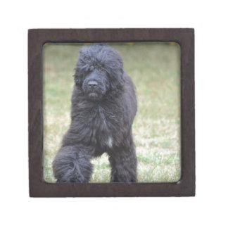 Black Portuguese Water Dog Jewelry Box