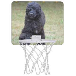 Black Portuguese Water Dog Mini Basketball Backboard