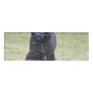 Black Portuguese Water Dog Name Tag