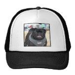 Black Pug Dog Hat