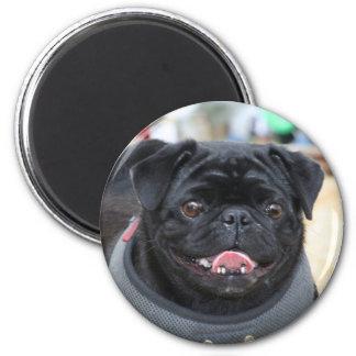 Black Pug Dog magnet