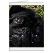 black-pug eyes