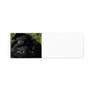 black-pug eyes.png label