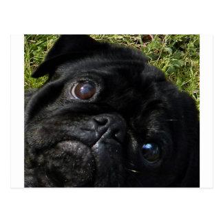 black-pug eyes postcard