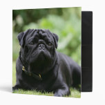 Black Pug Laying Down 3 Ring Binders