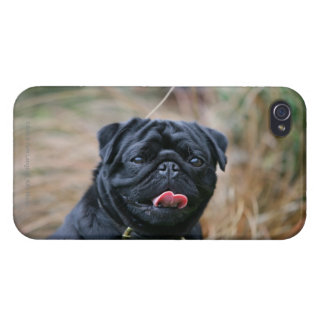 Black Pug Panting While Looking at Camera Cover For iPhone 4