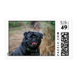 Black Pug Panting While Looking at Camera Postage