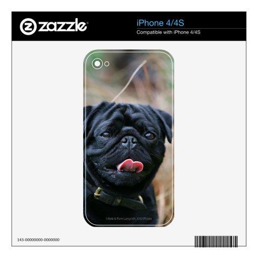 Black Pug Panting While Looking at Camera iPhone 4S Skin