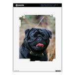 Black Pug Panting While Looking at Camera iPad 3 Decals