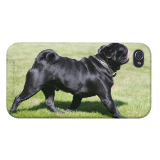 Black Pug Panting While Walking Cover For iPhone 4