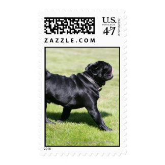 Black Pug Panting While Walking Postage