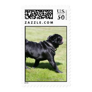 Black Pug Panting While Walking Postage
