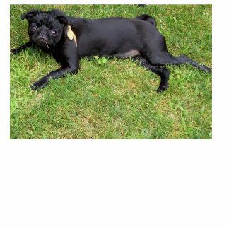 Black Pug Photo Sculpture
