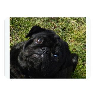 black-pug.png anuncios