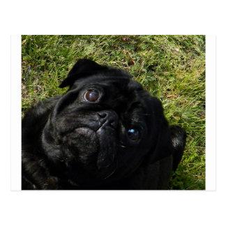 black-pug.png postcard