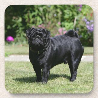 Black Pug Standing Looking at Camera Coaster