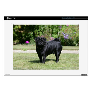 Black Pug Standing Looking at Camera Skins For Laptops