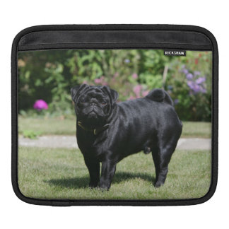 Black Pug Standing Looking at Camera Sleeves For iPads