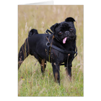 Black Pug Sticking Out Tounge Card