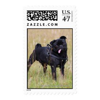 Black Pug Sticking Out Tounge Postage