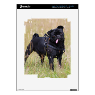 Black Pug Sticking Out Tounge Skins For iPad 3