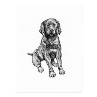 Black puppy lab postcard
