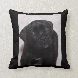 Black Puppy Pillow Photo
