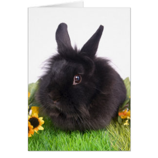 black rabbit card