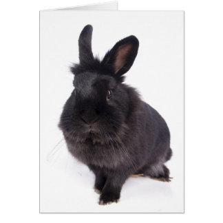 black rabbit greeting cards