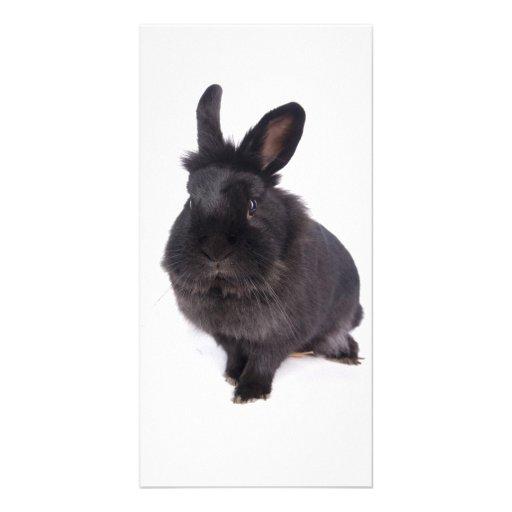 black rabbit photo card template
