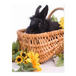 black rabbit postal