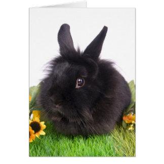 black rabbit felicitación