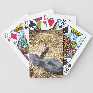 Black Racer Snake Playing Cards