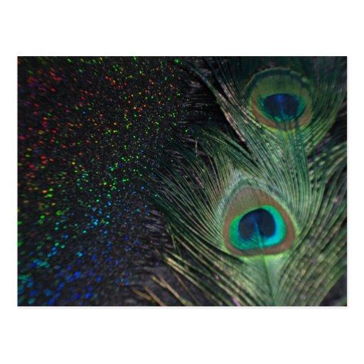 Black Rainbow Peacock Postcard