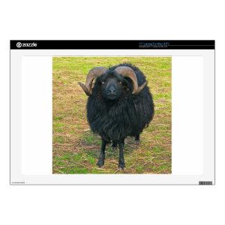Black Ram Laptop Decals