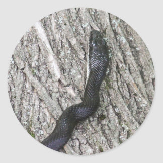 Black Rat Snake Classic Round Sticker