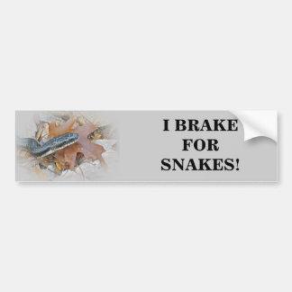 Black Rat Snake - Elaphe obsoleta obsoleta Bumper Sticker