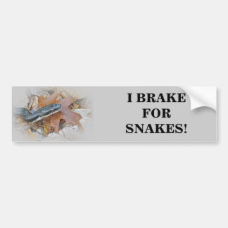 Black Rat Snake - Elaphe obsoleta obsoleta Car Bumper Sticker