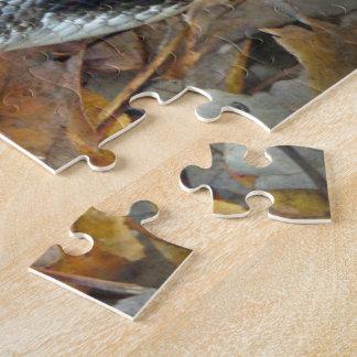 Black Rat Snake - Elaphe obsoleta obsoleta Jigsaw Puzzle