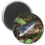 Black Rat Snake magnet