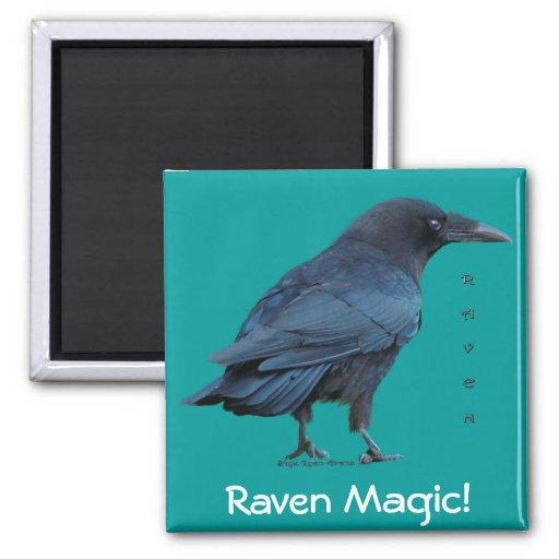 Black Raven Collection III Fridge Magnet