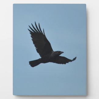 Black Raven Flying in Blue Sky Photo Photo Plaques