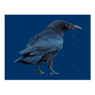Black Raven III Postcard Series