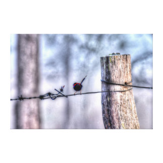 BLACK & RED FINCH AUSTRALIA WITH ART EFFECTS CANVAS PRINT
