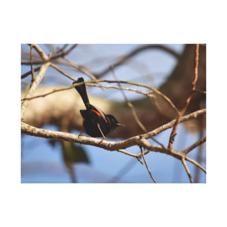 BLACK & RED FINCH QUEENSLAND AUSTRALIA CANVAS PRINT