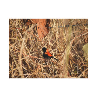 BLACK & RED FINCH RURAL QUEENSLAND AUSTRALIA CANVAS PRINT