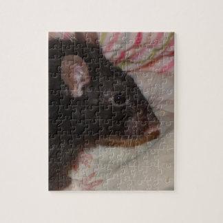 black rex rat puzzle with tin